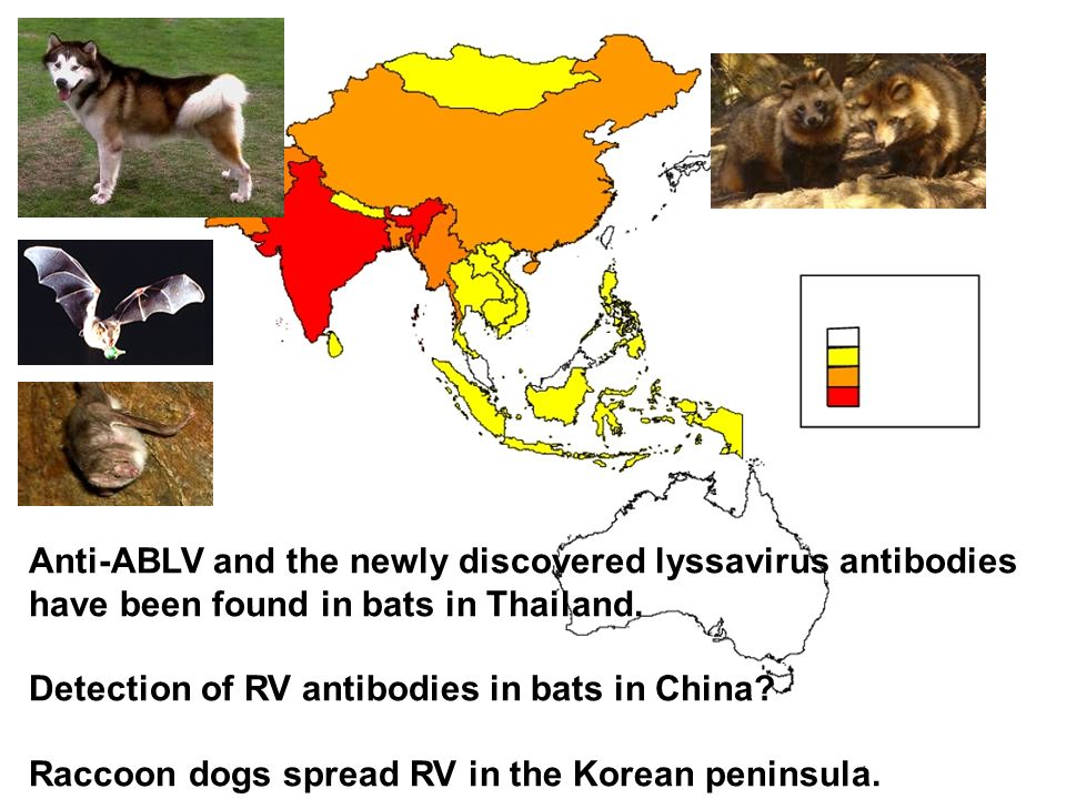 Anti-ABLV and the newly discovered lyssavirus antibodies have been found in bats in Thailand.
