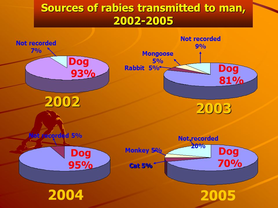 Sources of rabies transmitted to man, 2002-2005 Not recorded 5% Dog 95% 2004 Dog 93% Not recorded 7%2002 Dog 81% Not recorded 9% Mongoose 5% Rabbit 5%