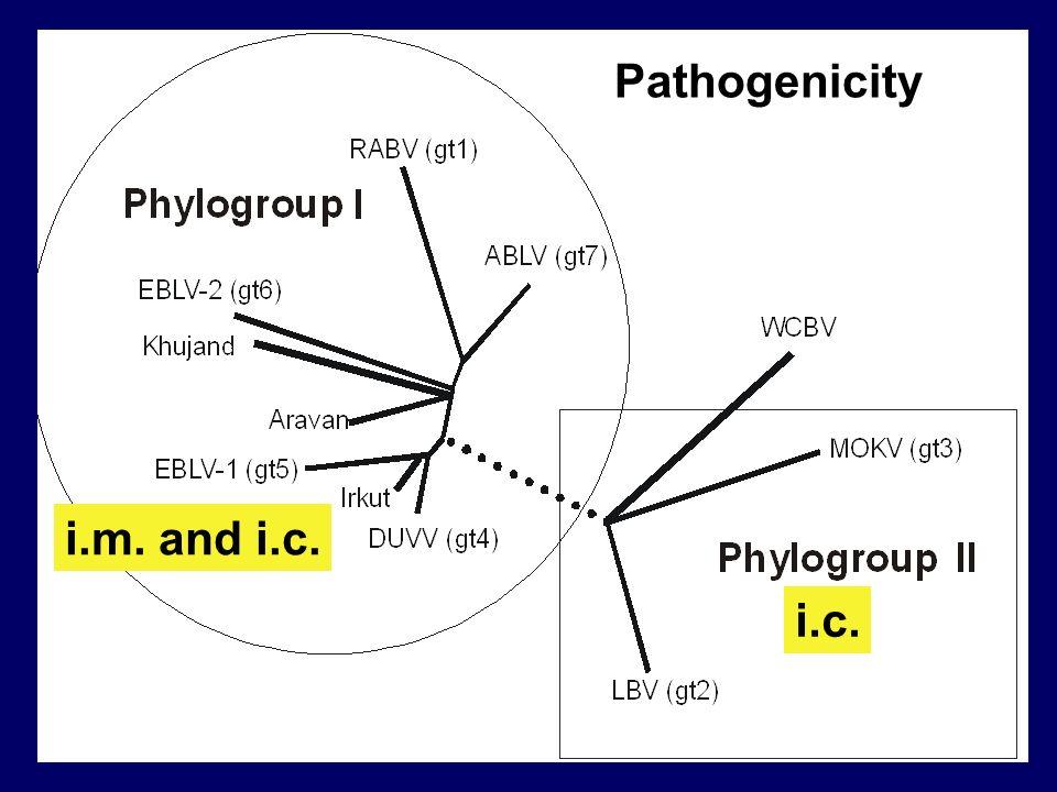 Pathogenicity i.m. and i.c. i.c.