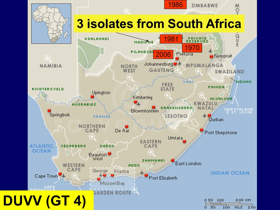 1970 2006 1981 DUVV (GT 4) 1986 3 isolates from South Africa