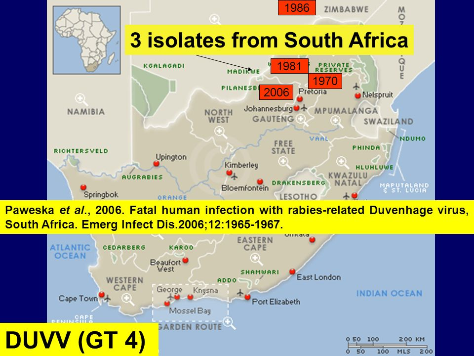 1970 2006 1981 DUVV (GT 4) 1986 3 isolates from South Africa Paweska et al., 2006. Fatal human infection with rabies-related Duvenhage virus, South Af