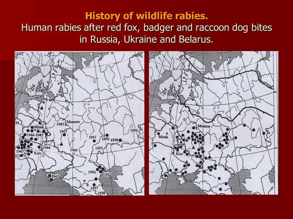 History of wildlife rabies. Human rabies after red fox, badger and raccoon dog bites in Russia, Ukraine and Belarus.