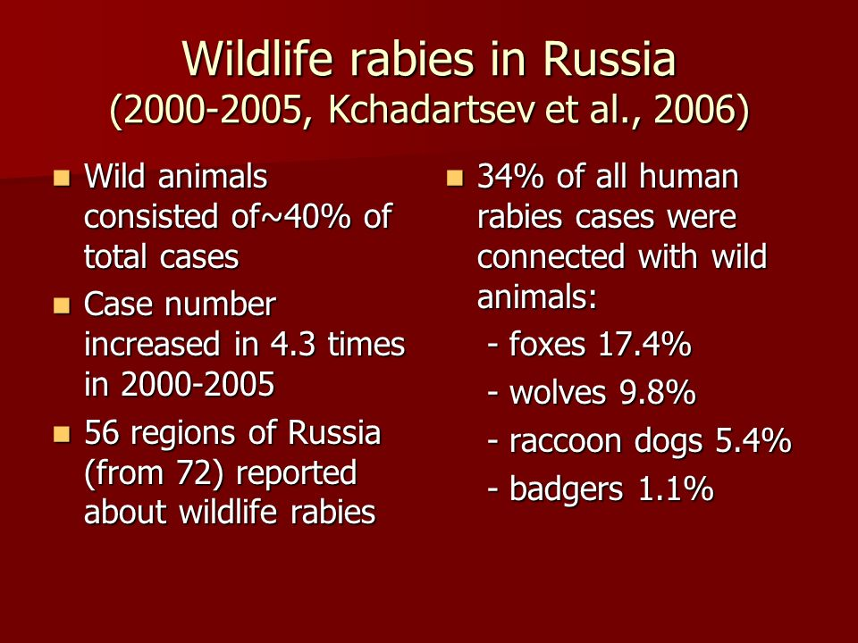 Oral rabies vaccination and wildlife rabies in Russia Large scale ORV started in 1998 (Avilov et al., 2002) Large scale ORV started in 1998 (Avilov et al., 2002) ORV is continuing till now ORV is continuing till now Why we have no positive results.
