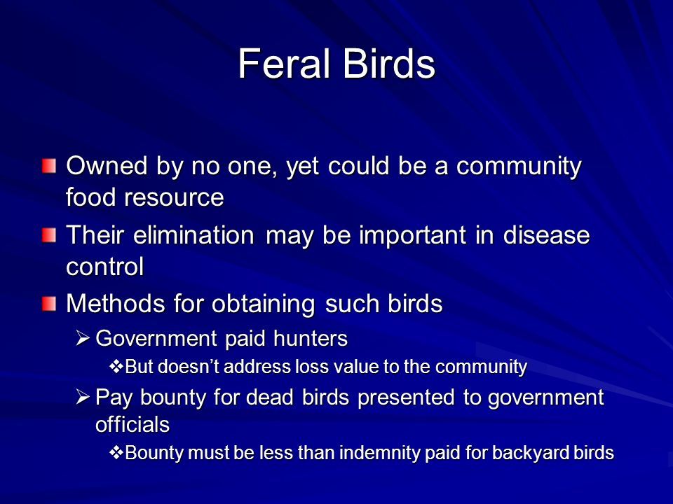 Feral Birds Owned by no one, yet could be a community food resource Their elimination may be important in disease control Methods for obtaining such b