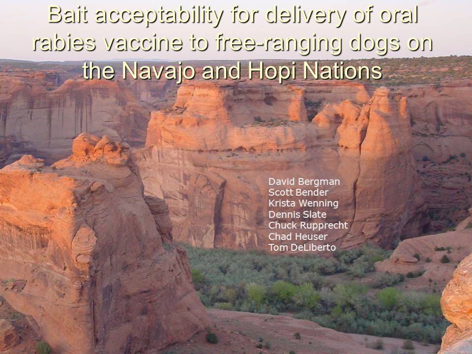 Bait acceptability for delivery of oral rabies vaccine to free-ranging dogs on the Navajo and Hopi Nations David Bergman Scott Bender Krista Wenning Dennis Slate Chuck Rupprecht Chad Heuser Tom DeLiberto