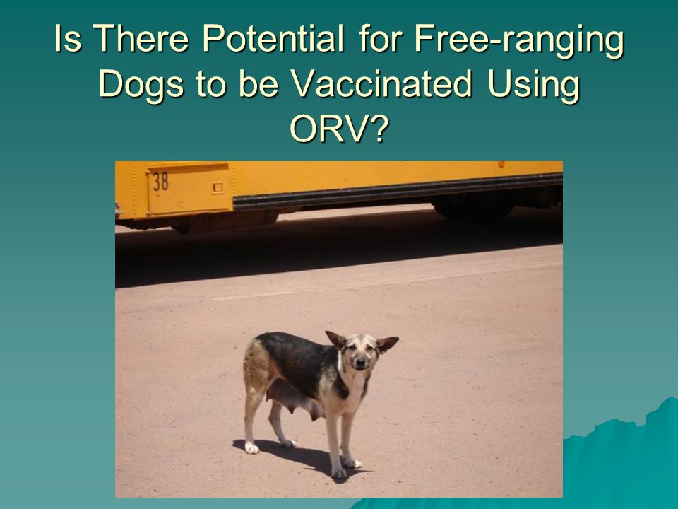 Is There Potential for Free-ranging Dogs to be Vaccinated Using ORV?