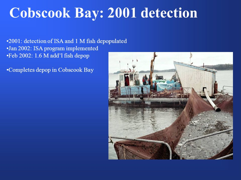 Cobscook Bay: 2001 detection 2001: detection of ISA and 1 M fish depopulated Jan 2002: ISA program implemented Feb 2002: 1.6 M addl fish depop Completes depop in Cobscook Bay
