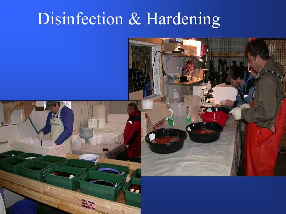 Disinfection & Hardening