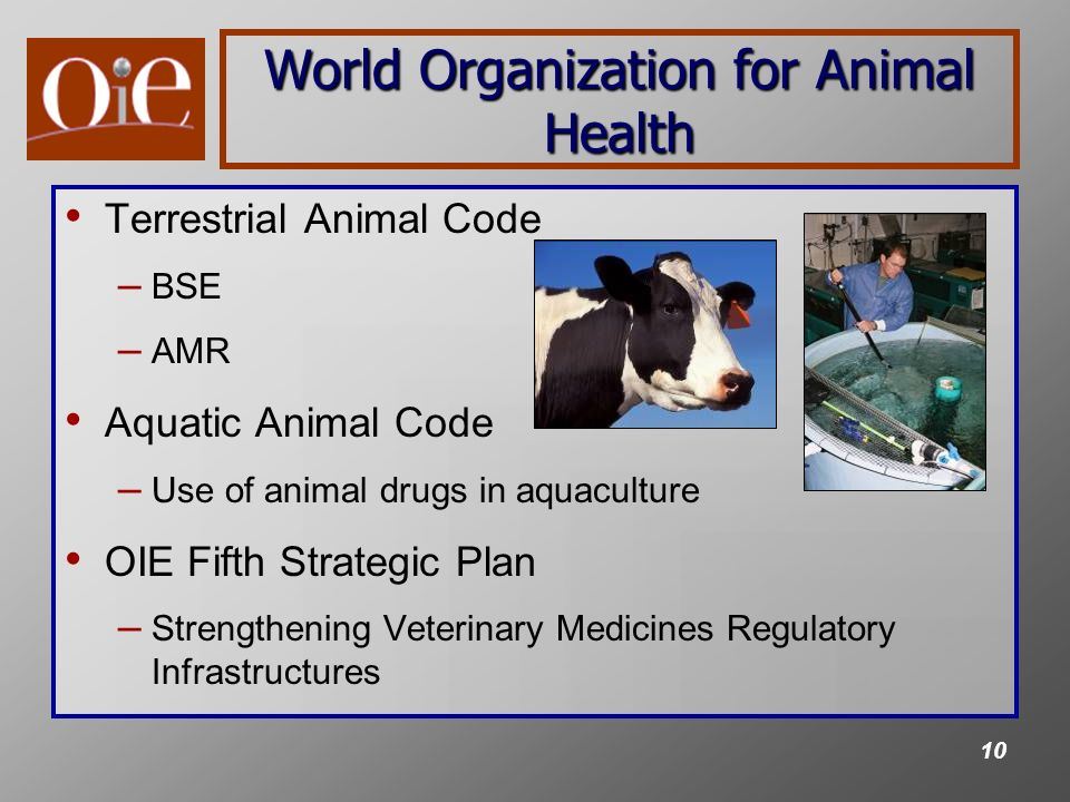 10 World Organization for Animal Health Terrestrial Animal Code – BSE – AMR Aquatic Animal Code – Use of animal drugs in aquaculture OIE Fifth Strategic Plan – Strengthening Veterinary Medicines Regulatory Infrastructures