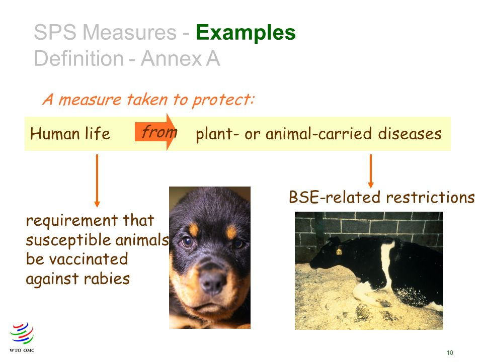 10 SPS Measures - Examples Definition - Annex A Human lifeplant- or animal-carried diseases from A measure taken to protect: requirement that susceptible animals be vaccinated against rabies BSE-related restrictions