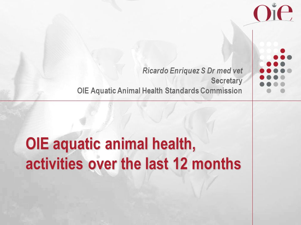 OIE aquatic animal health, activities over the last 12 months Ricardo Enriquez S Dr med vet Secretary OIE Aquatic Animal Health Standards Commission