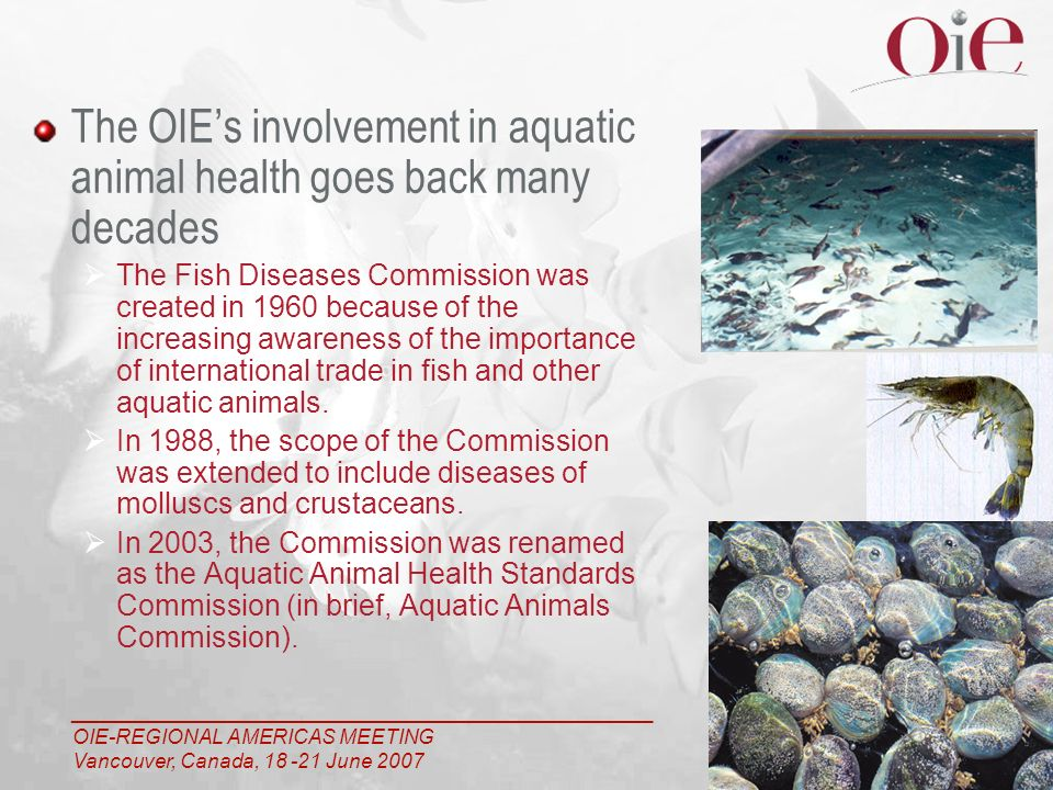 ___________________________________________________ OIE-REGIONAL AMERICAS MEETING Vancouver, Canada, 18 -21 June 2007 3 The OIEs involvement in aquatic animal health goes back many decades The Fish Diseases Commission was created in 1960 because of the increasing awareness of the importance of international trade in fish and other aquatic animals.