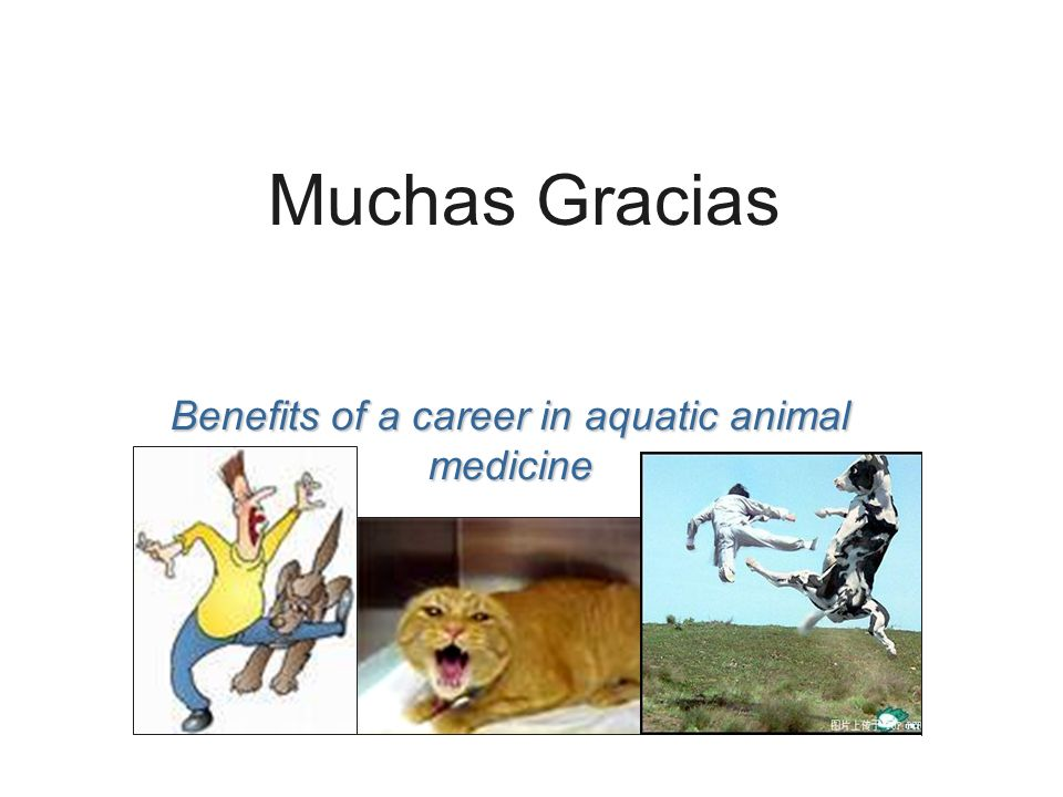 Benefits of a career in aquatic animal medicine Muchas Gracias