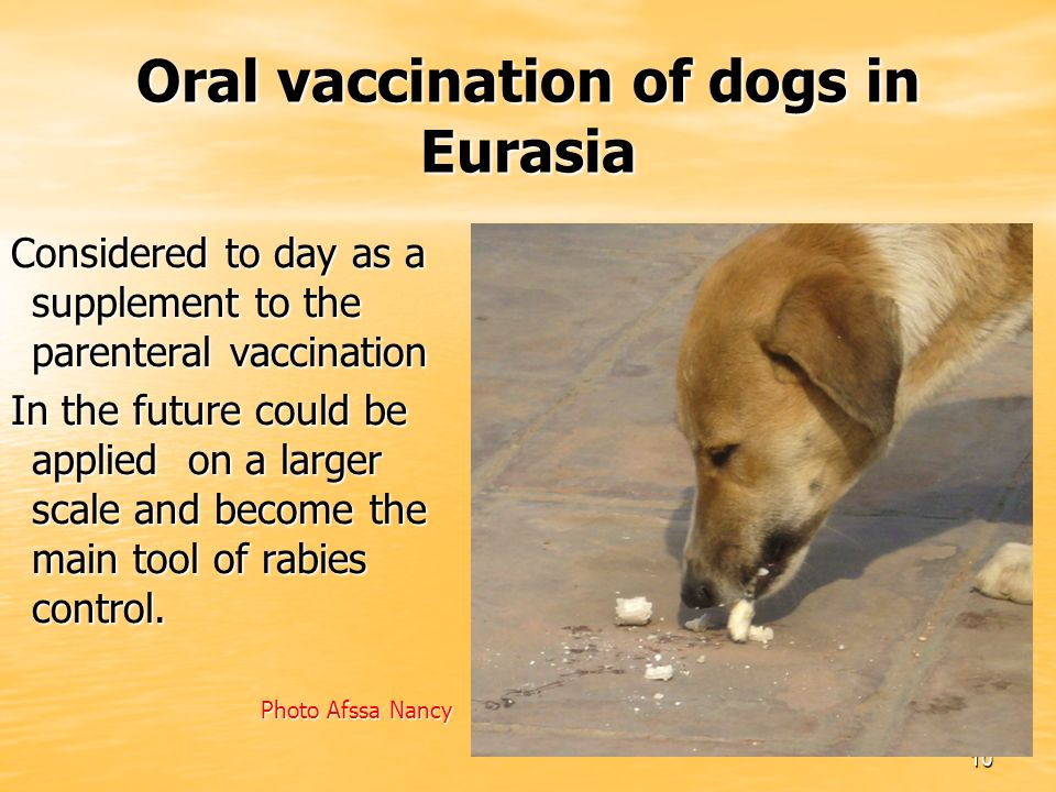 10 Oral vaccination of dogs in Eurasia Considered to day as a supplement to the parenteral vaccination In the future could be applied on a larger scale and become the main tool of rabies control.