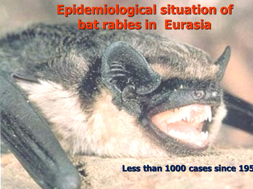 17 Epidemiological situation of bat rabies in Eurasia Less than 1000 cases since 1954