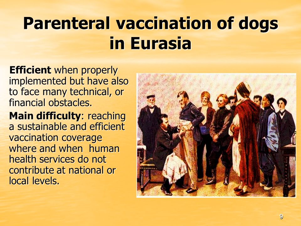 9 Parenteral vaccination of dogs in Eurasia Efficient when properly implemented but have also to face many technical, or financial obstacles.