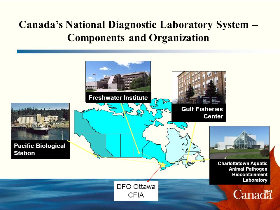 Canadas National Diagnostic Laboratory System – Components and Organization Pacific Biological Station Freshwater Institute Gulf Fisheries Center Charlottetown Aquatic Animal Pathogen Biocontainment Laboratory DFO Ottawa CFIA