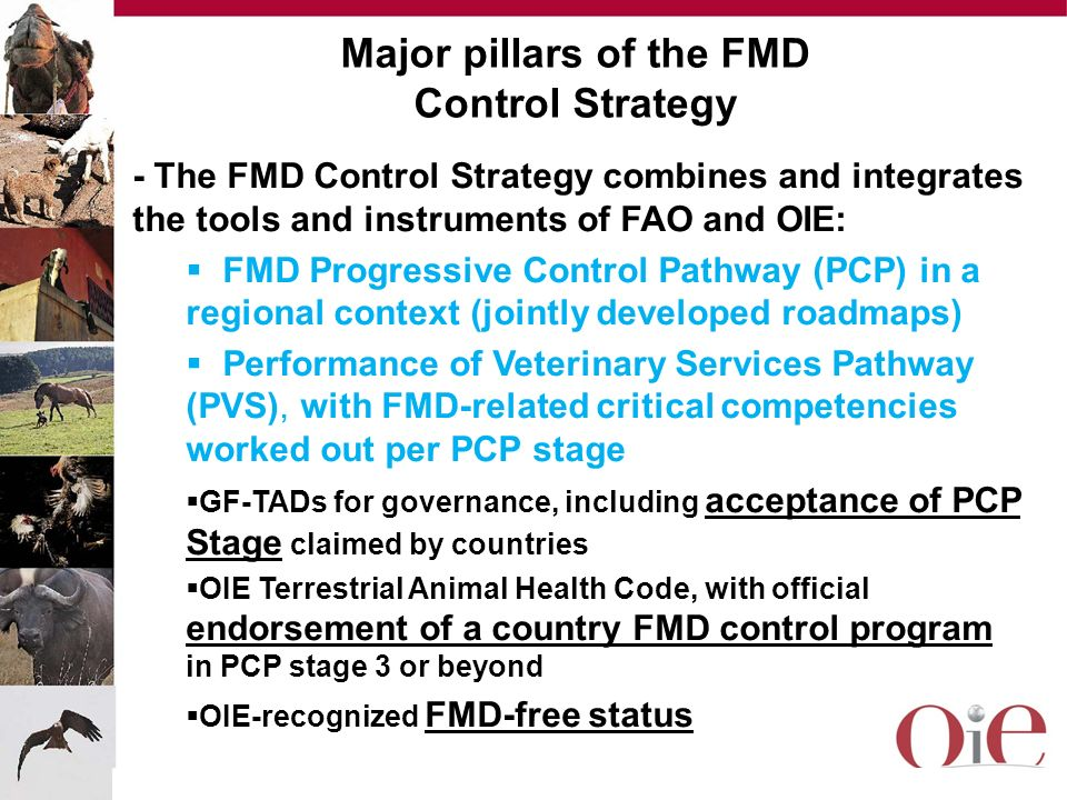 Major pillars of the FMD Control Strategy - The FMD Control Strategy combines and integrates the tools and instruments of FAO and OIE: FMD Progressive
