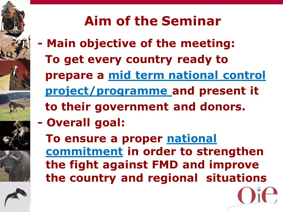 Their situation, PCP stage, main challenges (surveillance, animal movements, vaccination…) Their ongoing control programmes Their possibility and way forward to prepare a FMD control project to be presented by the government to donors During the morning session each country will have presented