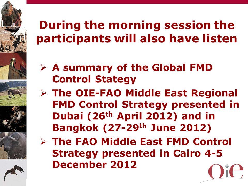 A summary of the Global FMD Control Stategy The OIE-FAO Middle East Regional FMD Control Strategy presented in Dubai (26 th April 2012) and in Bangkok