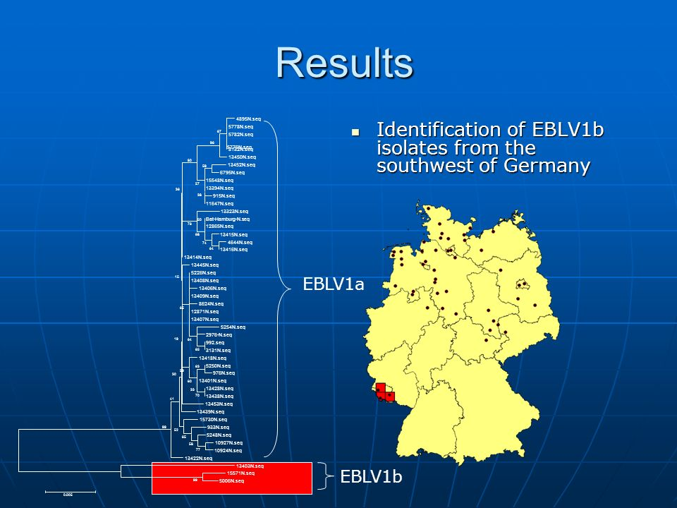 Results Identification of EBLV1b isolates from the southwest of Germany Identification of EBLV1b isolates from the southwest of Germany 5776N.seq EBLV1a EBLV1b