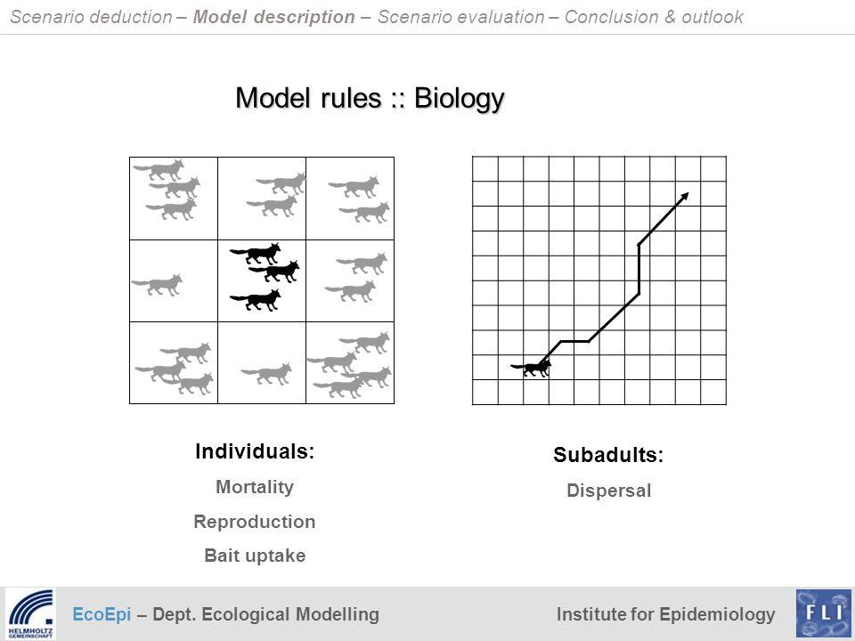 EcoEpi – Dept. Ecological ModellingInstitute for Epidemiology Scenario deduction – Model description – Scenario evaluation – Conclusion & outlook Indi