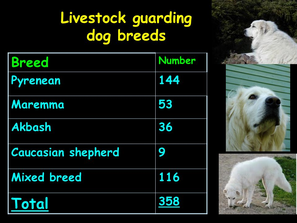 Livestock guarding dog breeds Breed Number Pyrenean144 Maremma53 Akbash36 Caucasian shepherd9 Mixed breed116 Total 358