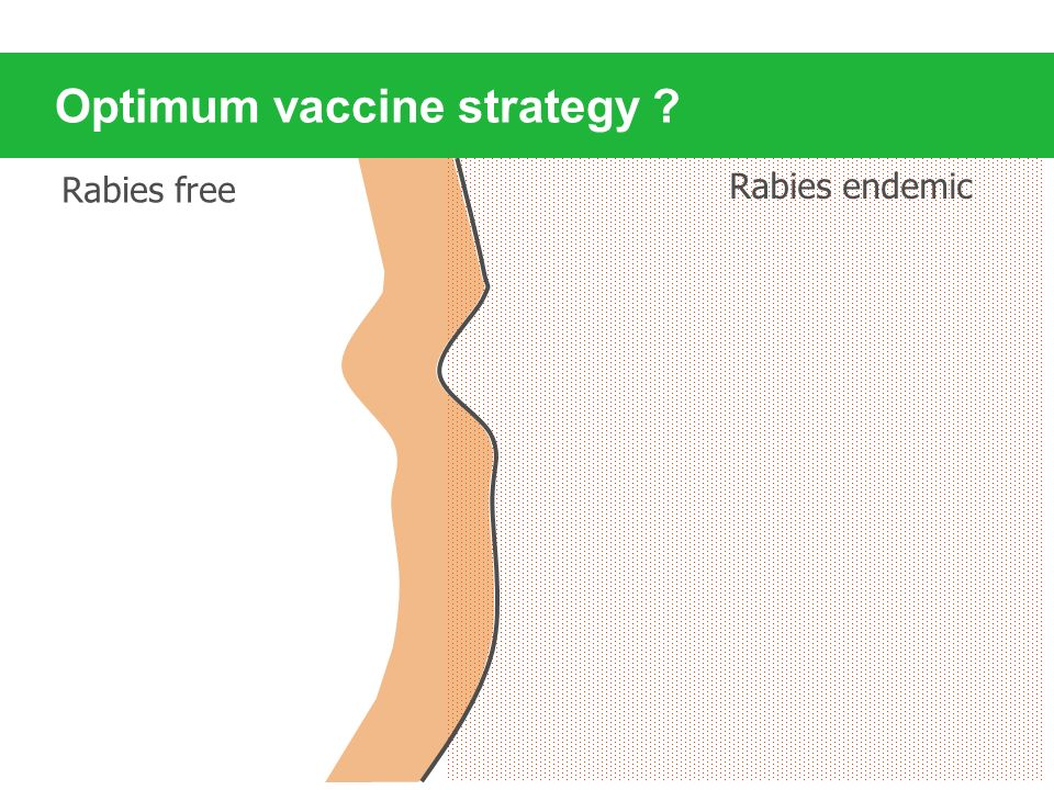 Optimum vaccine strategy ? Rabies free Rabies endemic