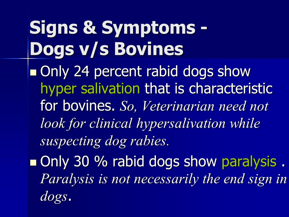 Signs & Symptoms - Dogs v/s Bovines Only 24 percent rabid dogs show hyper salivation that is characteristic for bovines.