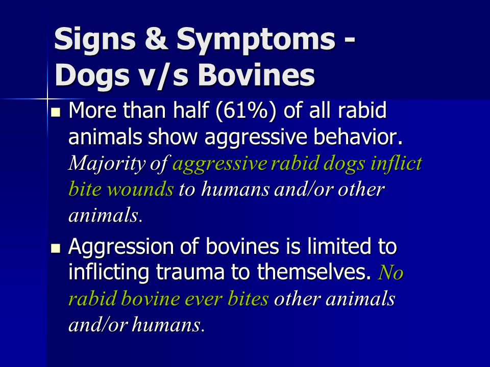 Signs & Symptoms - Dogs v/s Bovines More than half (61%) of all rabid animals show aggressive behavior.