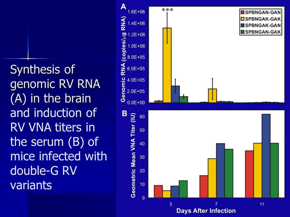 Synthesis of genomic RV RNA (A) in the brain Synthesis of genomic RV RNA (A) in the brain and induction of RV VNA titers in the serum (B) of mice infected with double-G RV variants