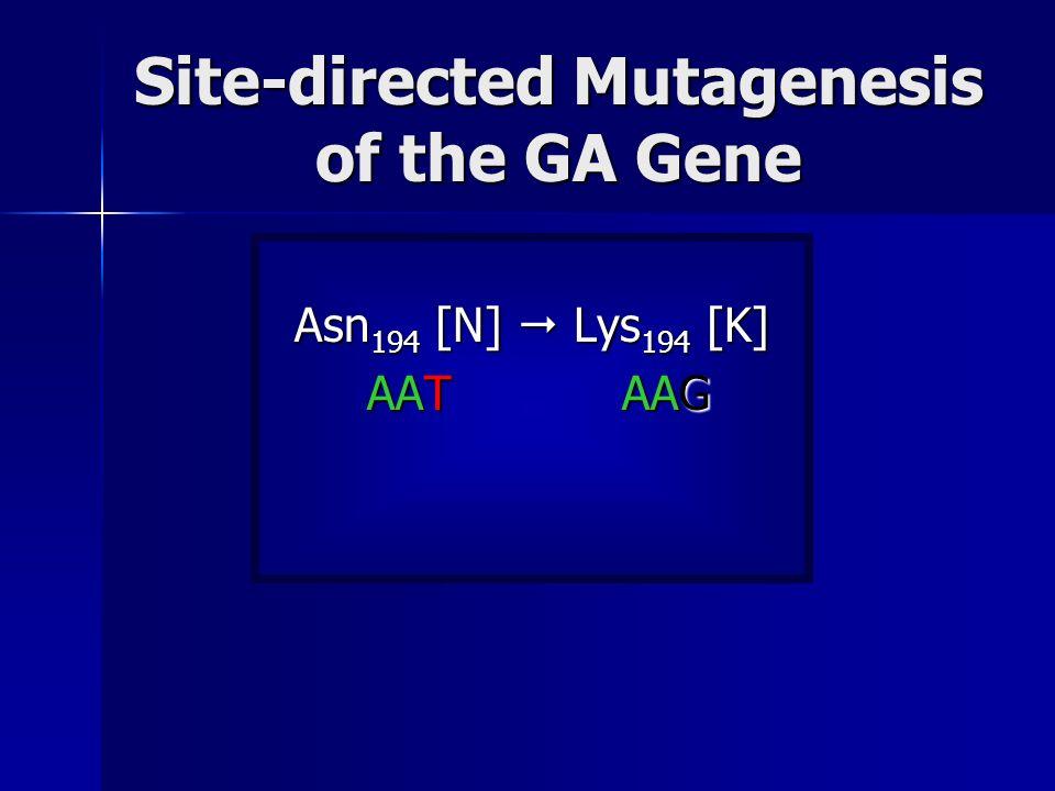 Site-directed Mutagenesis of the GA Gene Asn 194 [N] Lys 194 [K] AAT AAG AAT AAG