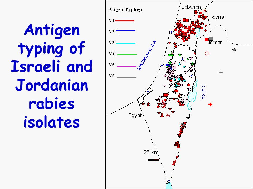 Antigen typing of Israeli and Jordanian rabies isolates