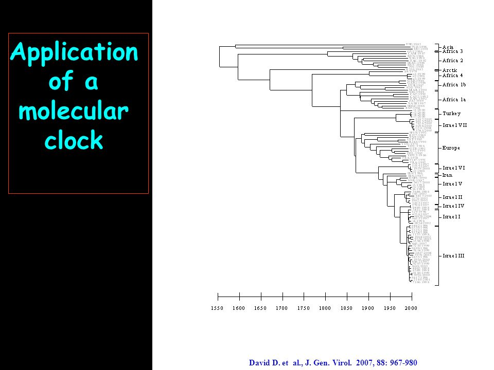 Application of a molecular clock David D. et al., J. Gen. Virol. 2007, 88: 967-980