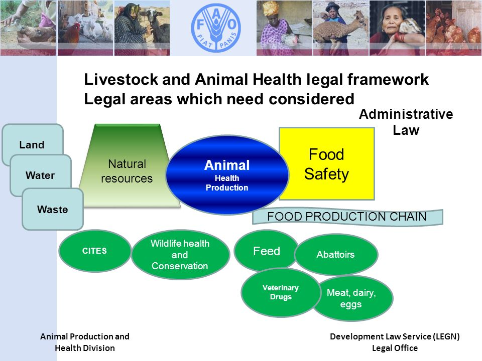 Animal Production and Health Division Development Law Service (LEGN) Legal Office Food Safety Feed Abattoirs Meat, dairy, eggs Veterinary Drugs FOOD PRODUCTION CHAIN Natural resources Wildlife health and Conservation CITES Livestock and Animal Health legal framework Legal areas which need considered Land Water Waste Animal Health Production Administrative Law