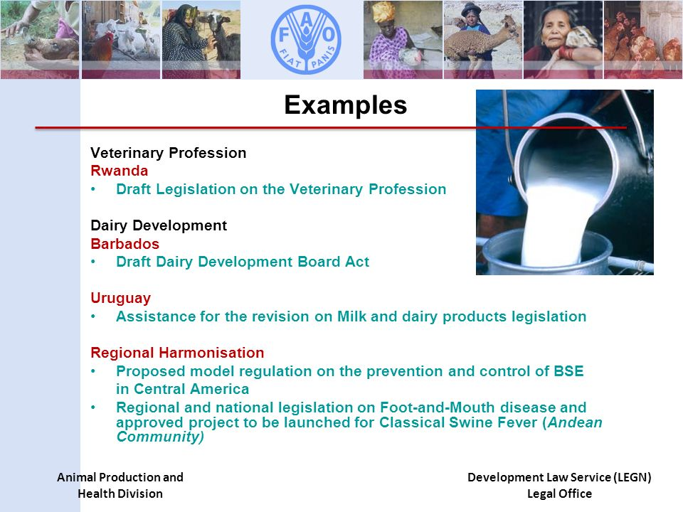 Animal Production and Health Division Development Law Service (LEGN) Legal Office Examples Veterinary Profession Rwanda Draft Legislation on the Veterinary Profession Dairy Development Barbados Draft Dairy Development Board Act Uruguay Assistance for the revision on Milk and dairy products legislation Regional Harmonisation Proposed model regulation on the prevention and control of BSE in Central America Regional and national legislation on Foot-and-Mouth disease and approved project to be launched for Classical Swine Fever (Andean Community)