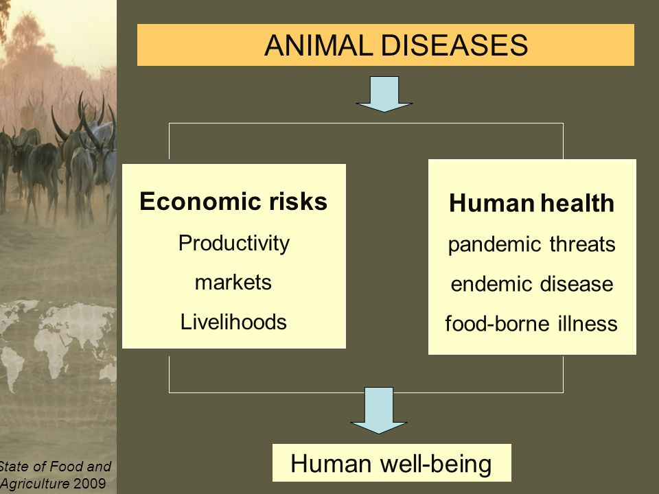 Animal Production and Health Division Development Law Service (LEGN) Legal Office ANIMAL DISEASES Economic risks Productivity markets Livelihoods Human health pandemic threats endemic disease food-borne illness Human well-being State of Food and Agriculture 2009