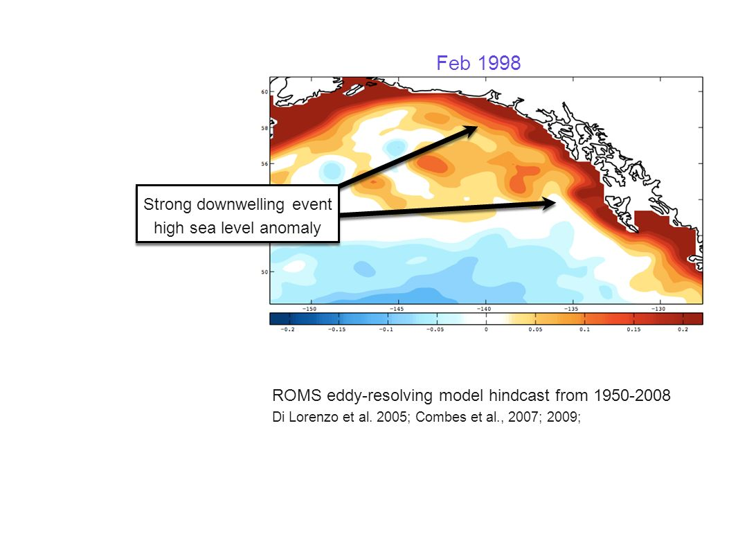 Feb 1998 Strong downwelling event high sea level anomaly Strong downwelling event high sea level anomaly ROMS eddy-resolving model hindcast from 1950-