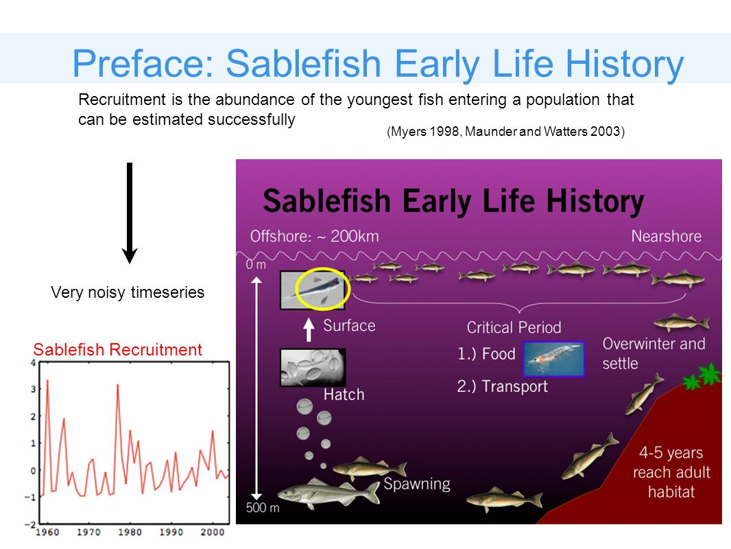 Sablefish Recruitment Preface: Sablefish Early Life History Recruitment is the abundance of the youngest fish entering a population that can be estima