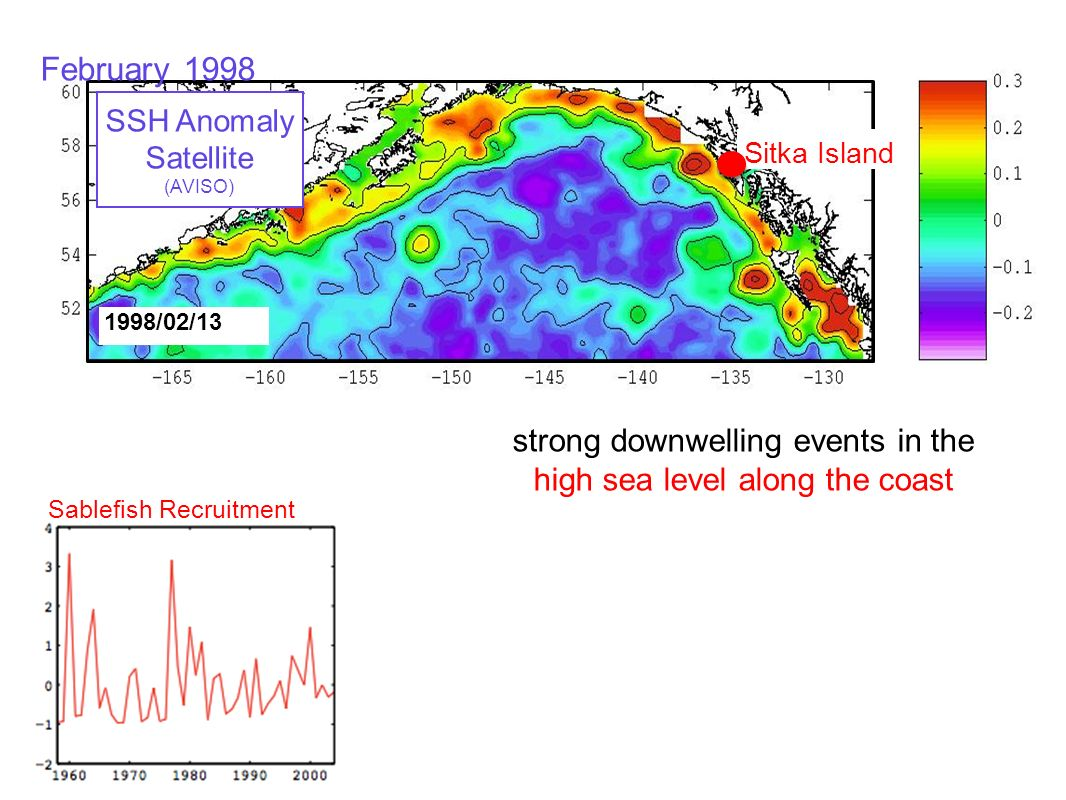 Sablefish Recruitment 1998/02/13 Sitka Island SSH Anomaly Satellite (AVISO) strong downwelling events in the high sea level along the coast February 1998 stronger mesoscale Anticyclonic Eddies