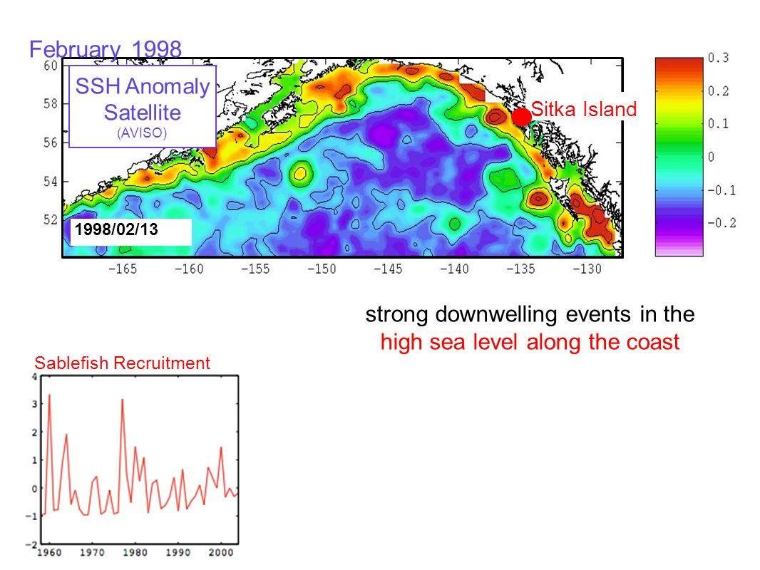 Sablefish Recruitment 1998/02/13 Sitka Island SSH Anomaly Satellite (AVISO) strong downwelling events in the high sea level along the coast February 1