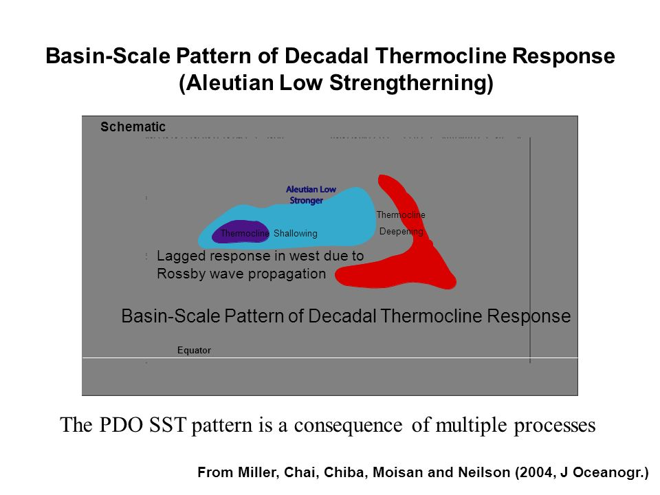 Thermocline Shallowing Thermocline Deepening Basin-Scale Pattern of Decadal Thermocline Response Lagged response in west due to Rossby wave propagatio