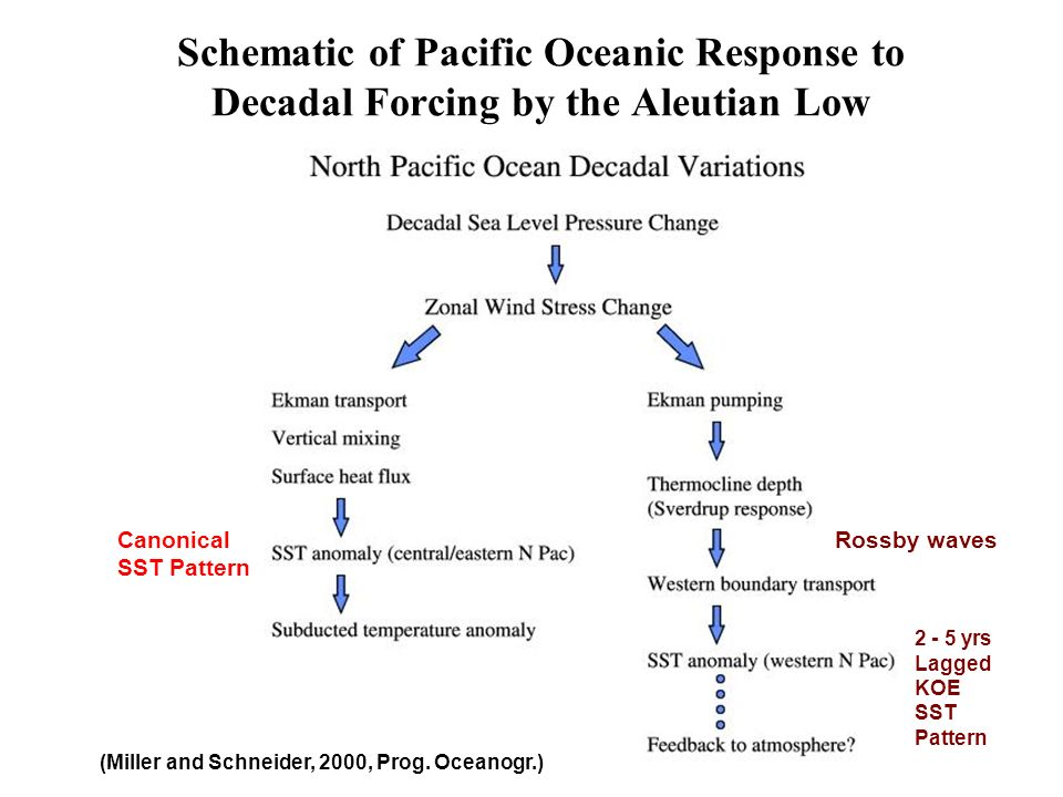 Schematic of Pacific Oceanic Response to Decadal Forcing by the Aleutian Low (Miller and Schneider, 2000, Prog. Oceanogr.) Canonical SST Pattern 2 - 5