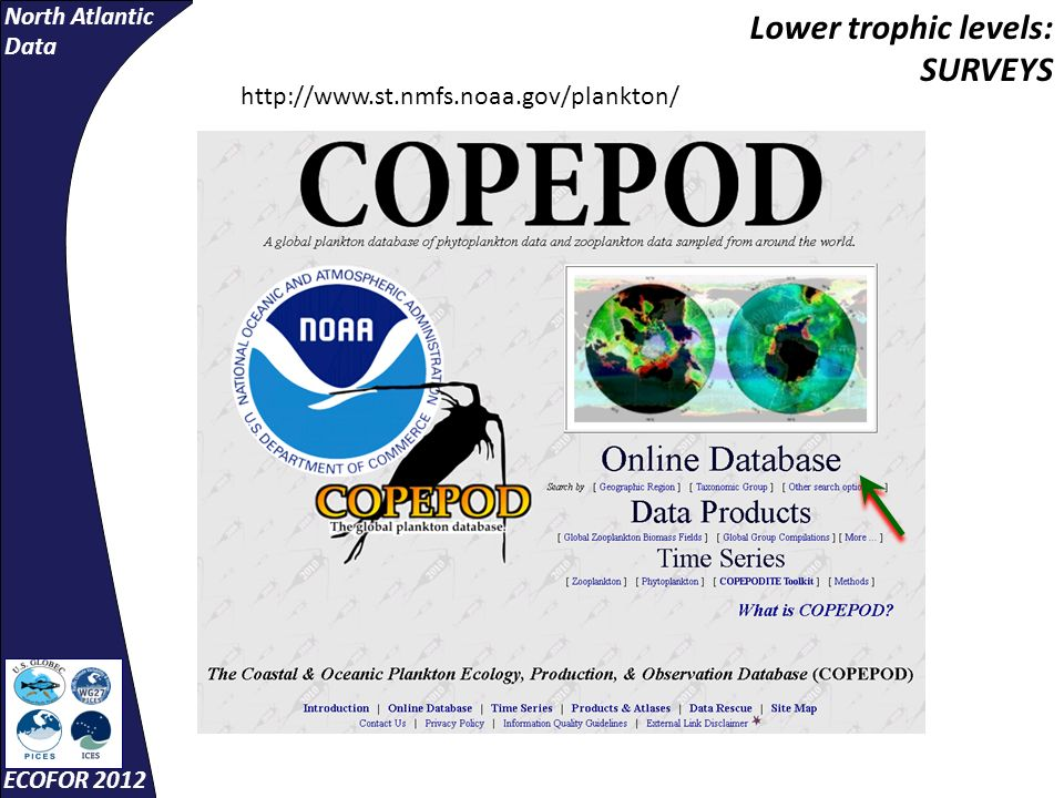 North Atlantic Data ECOFOR 2012 Lower trophic levels: SURVEYS http://www.st.nmfs.noaa.gov/plankton/