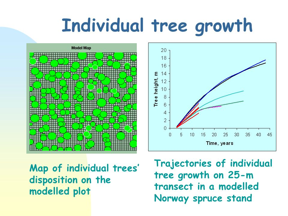 Individual tree growth Trajectories of individual tree growth on 25-m transect in a modelled Norway spruce stand Map of individual trees disposition on the modelled plot