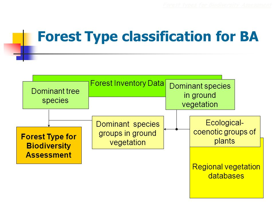 Regional vegetation databases Forest Type classification for BA Forest types for Biodiversity Assessment Forest Type for Biodiversity Assessment Ecological- coenotic groups of plants Forest Inventory Data Dominant tree species Dominant species in ground vegetation Dominant species groups in ground vegetation