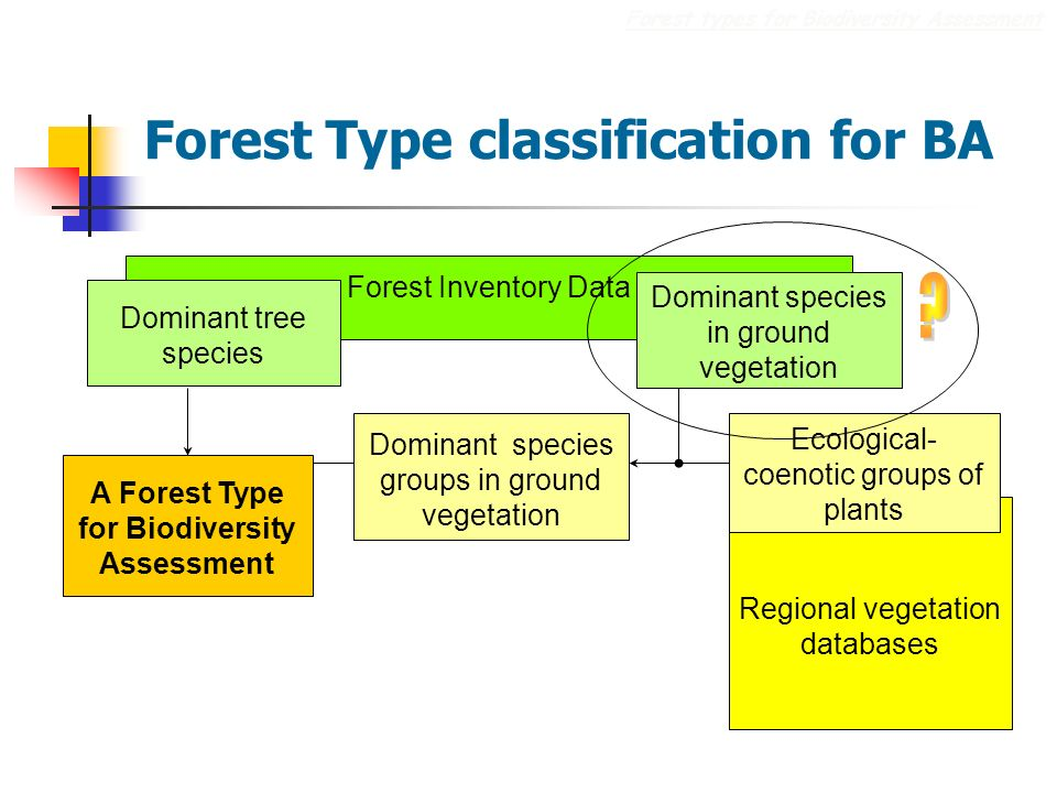 Forest Type classification for BA Forest types for Biodiversity Assessment Regional vegetation databases A Forest Type for Biodiversity Assessment Ecological- coenotic groups of plants Forest Inventory Data Dominant tree species Dominant species in ground vegetation Dominant species groups in ground vegetation
