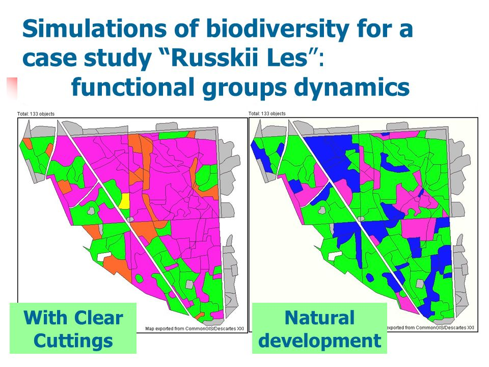 Functional groups dynamics Simulations of biodiversity for a case study Russkii Les: functional groups dynamics With Clear Cuttings Natural development