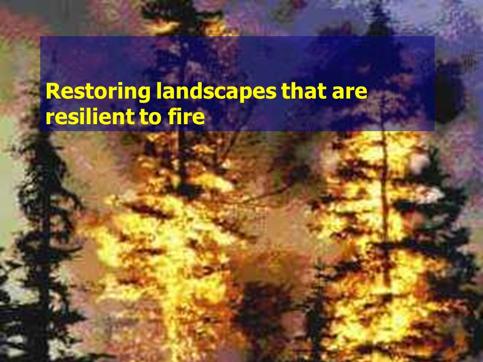 Restoring landscapes that are resilient to fire