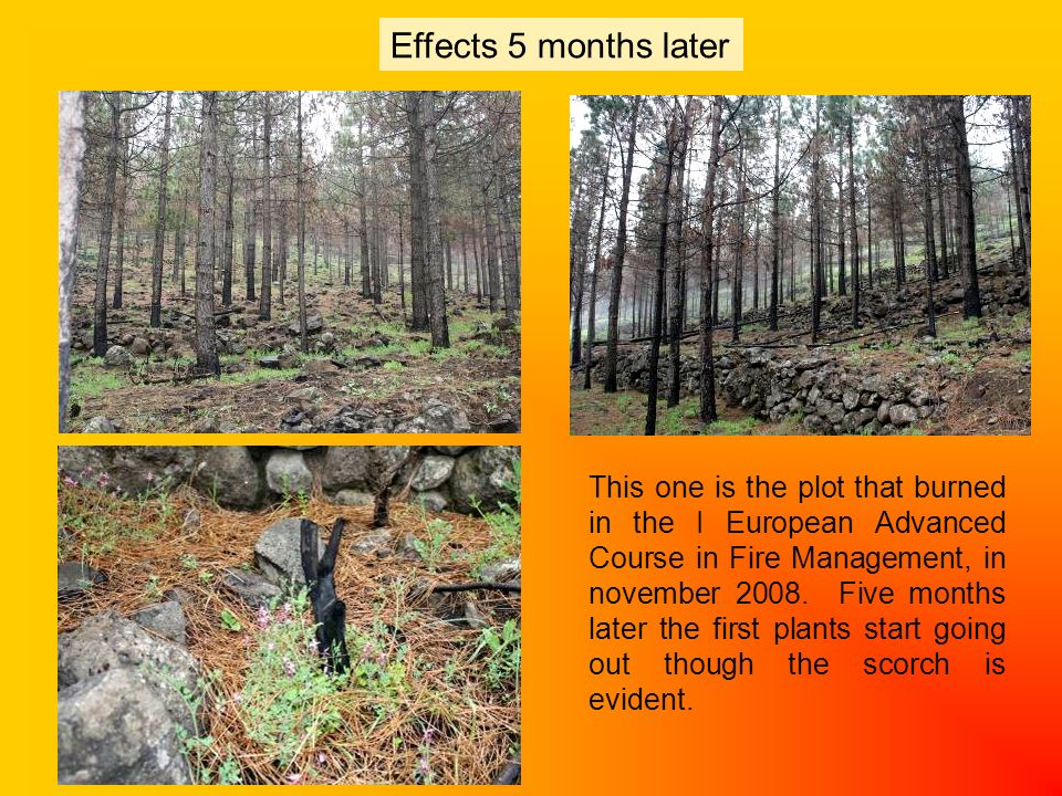 Effects 5 months later Initial situation During prescribed burning 1 day later This one is the plot that burned in the I European Advanced Course in Fire Management, in november 2008.